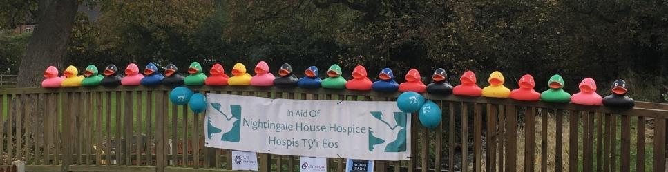 Nightingale House Hospice Ducks